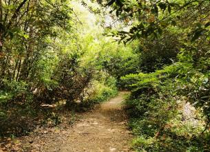 Macarons Trail