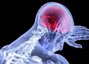 CONFERENZA Il cervello è un computer come un altro?