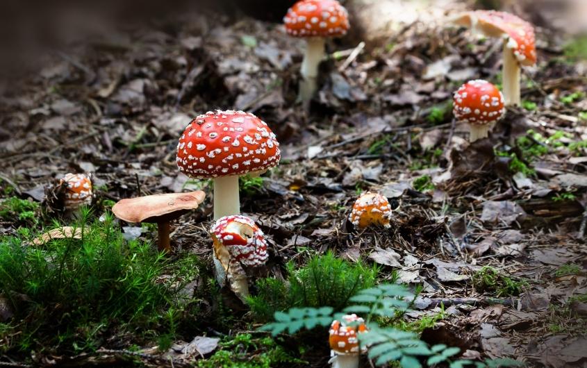 Conférence « Comment les champignons envahissent la terre ? »